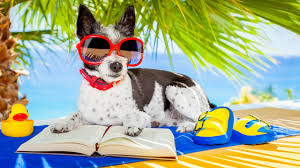 Picture of dog with beach background and text says Summer Reading